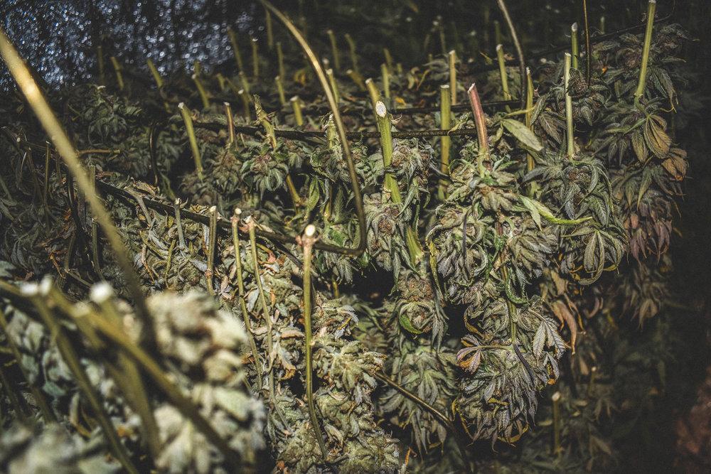 bouldergrown106.jpg