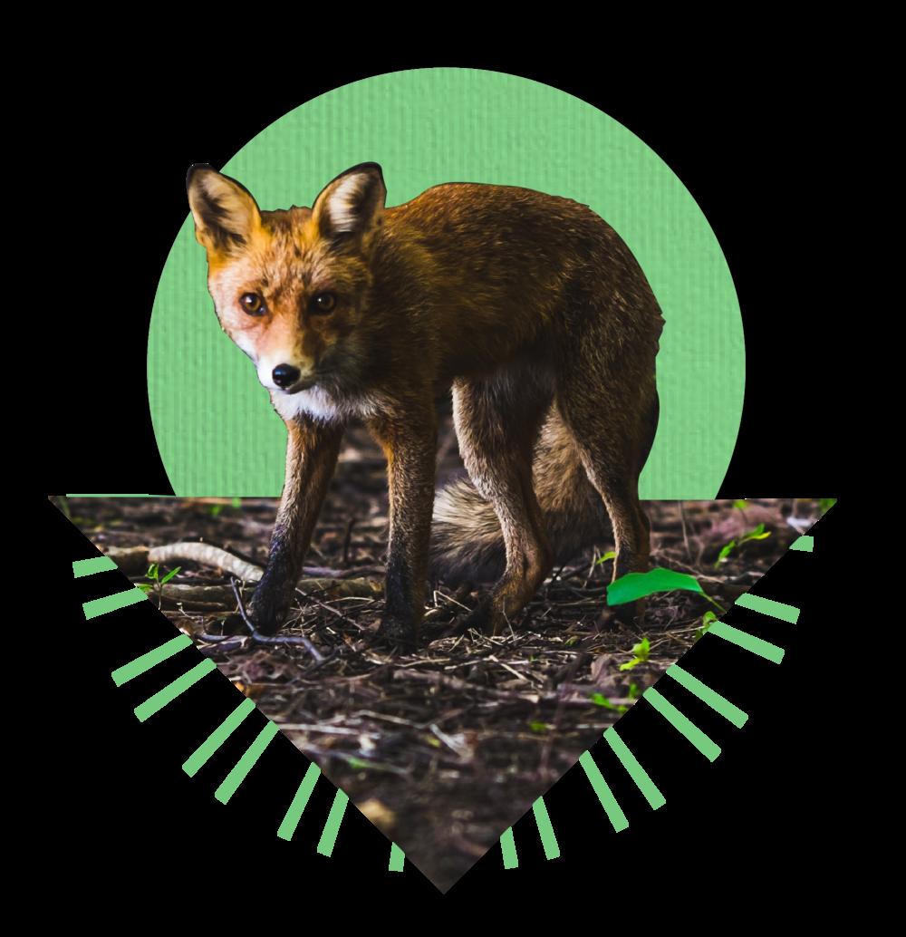 6-28 fox pic-34.png