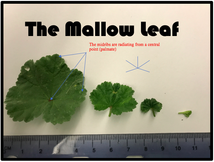 Figure 2: Diagram and photo by Kevin Healey.