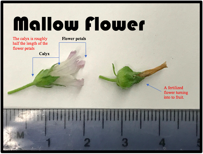 Figure 3: diagram and photo by Kevin Healey.