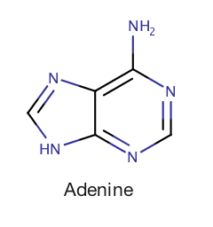 Image 2: Yes, this is the same adenine from the fab-four DNA nucleobases (G-C- A -T).