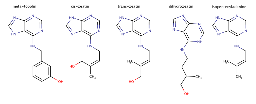 Image 4: A Woefully Incomplete Group of Endogenous Cytokinins:  meta -topolin,  cis -zeatin,  trans -zeatin,  dihydro -zeatin, and isopentenyladenine. These are but a few cytokinins which are produced inside of the plant.