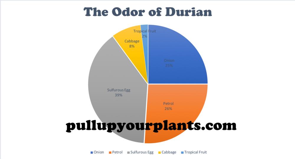 Graph 1: An Empirical Visualization of the odor of  Durio zibethinus.