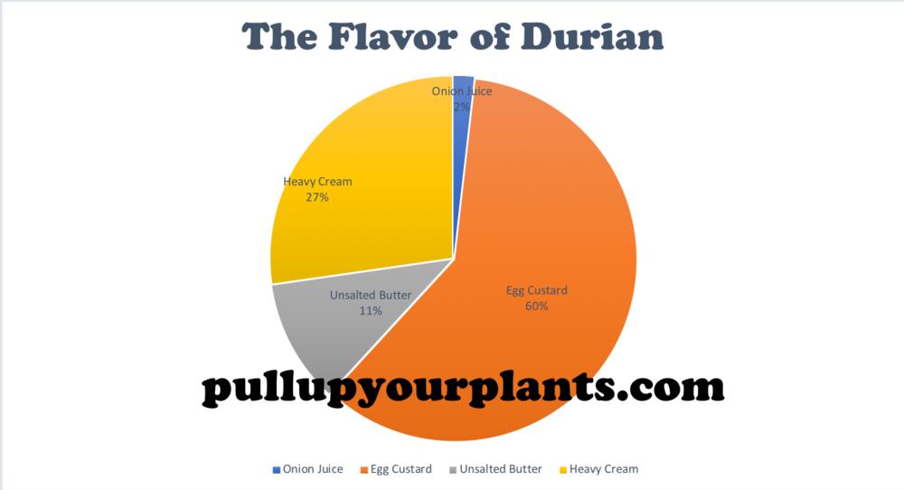 Graph 2: An Empirical Visualization of the Flavor of  Durio zibethinus