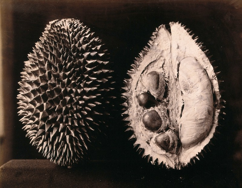Durian - A Spiked Ball Fulla Puddin