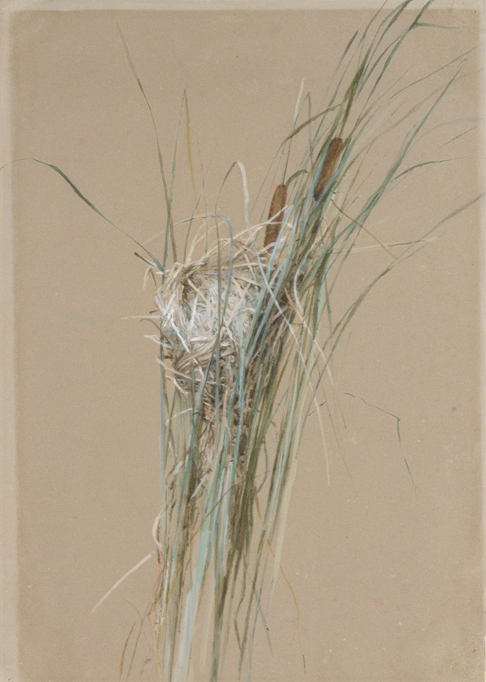 Bird's Nest in Cattails.  Painted in 1875 by Fidelia Bridges using watercolor and gouache. This painting is housed at The Metropolitan Museum of Art. Image in the Public Domain and can be accessed  HERE .