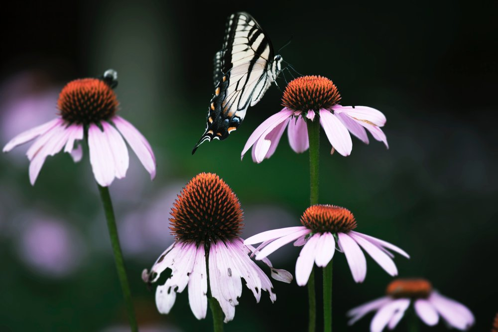 animal-photography-beautiful-bloom-1581896.jpg
