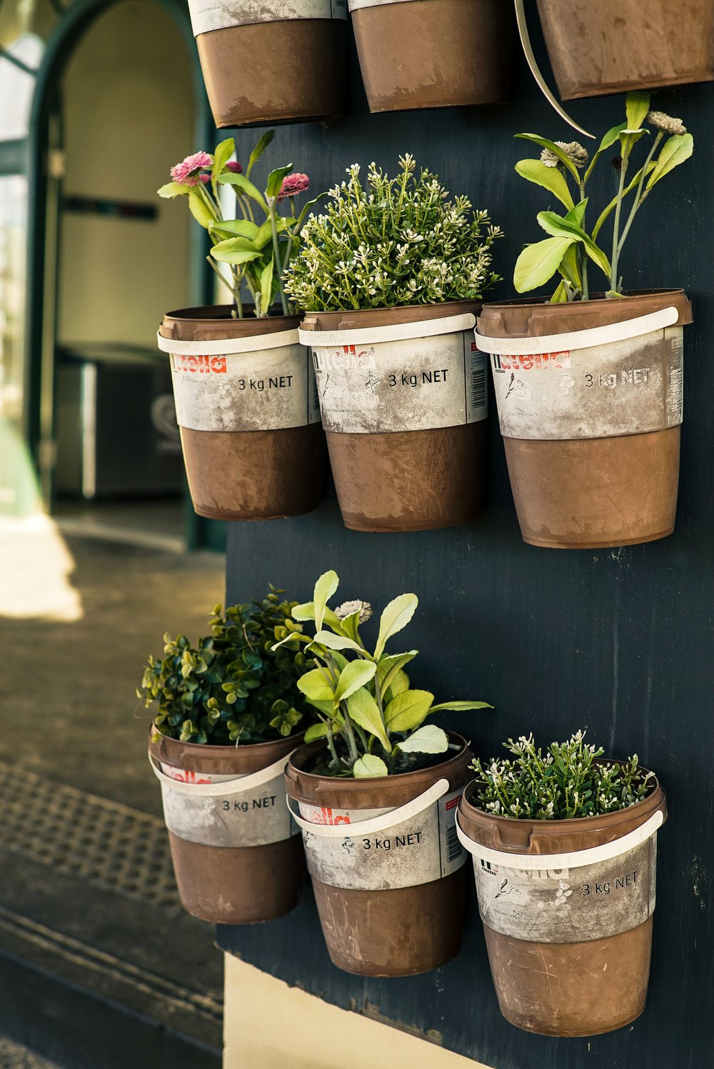 bucket-container-flora-1660533.jpg