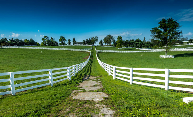 60321687 - the path between fields on a horse farm in rural kentucky