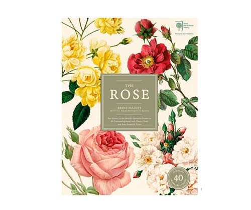 The Rose: The History of the World's Favourite Flower in 40 Captivating Roses by  The MET Store
