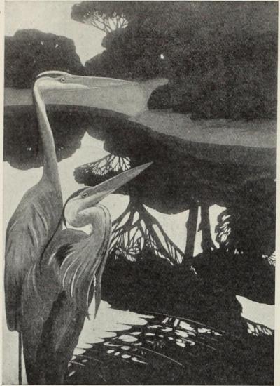 Love Herons-1.jpg
