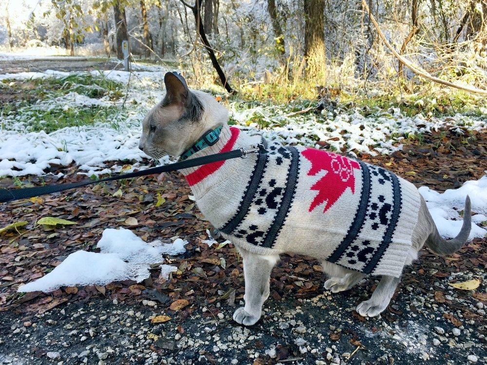 11_sweater.JPG