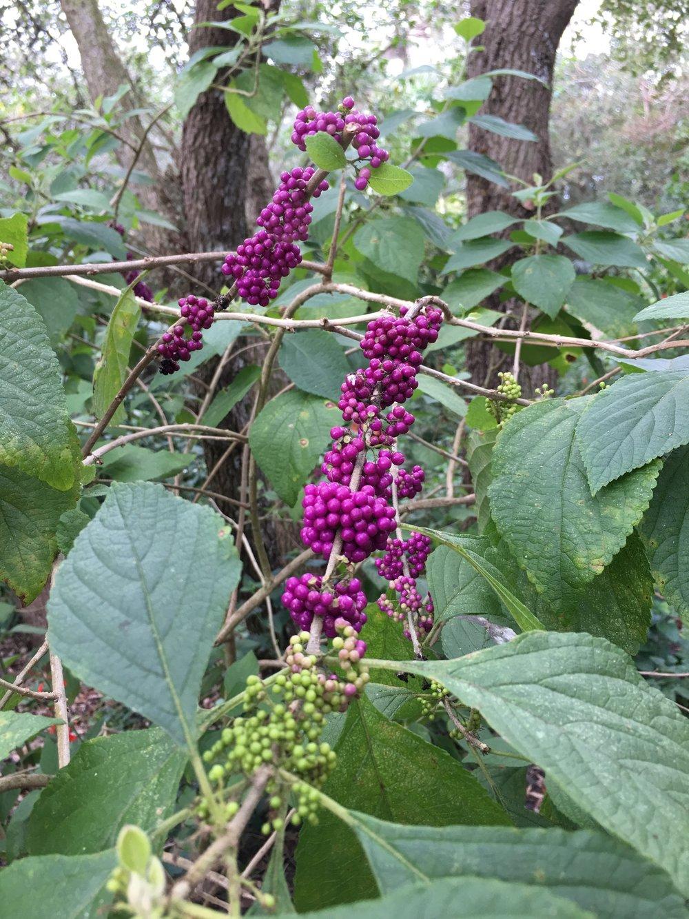 3_purple.JPG