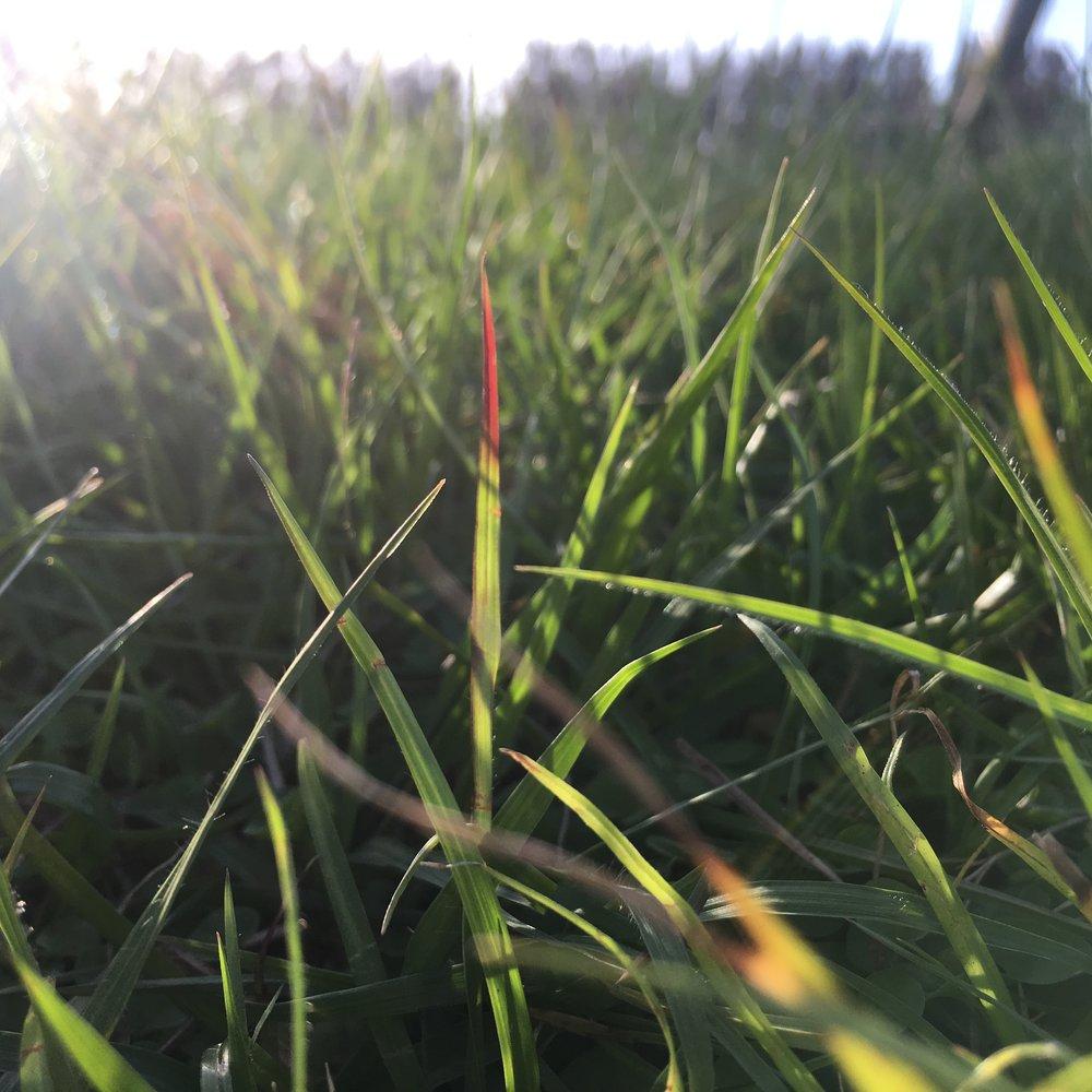 11_grass.JPG