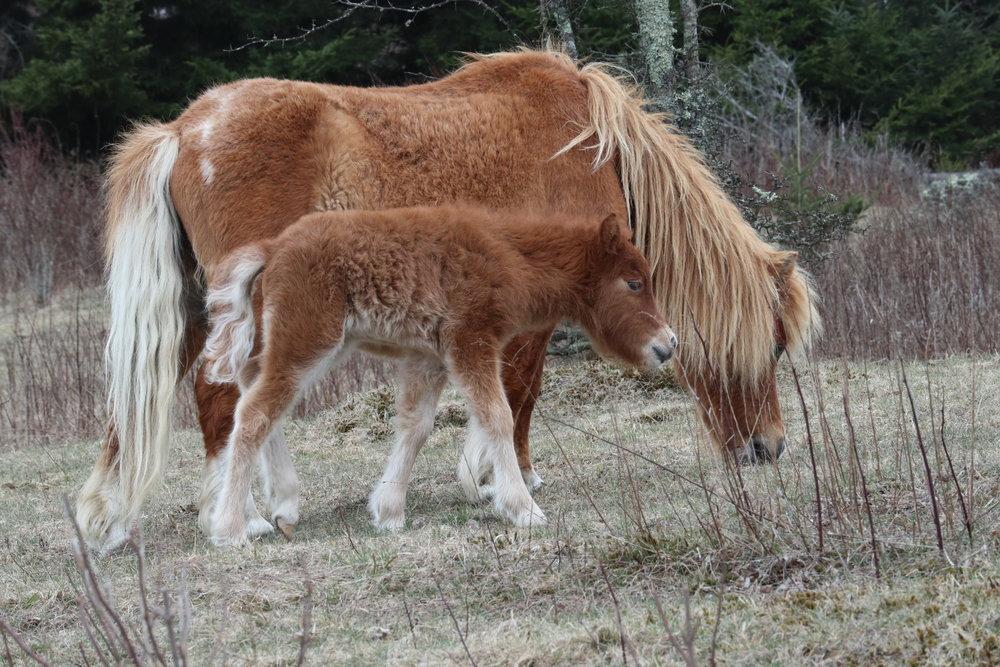 wild pony baby