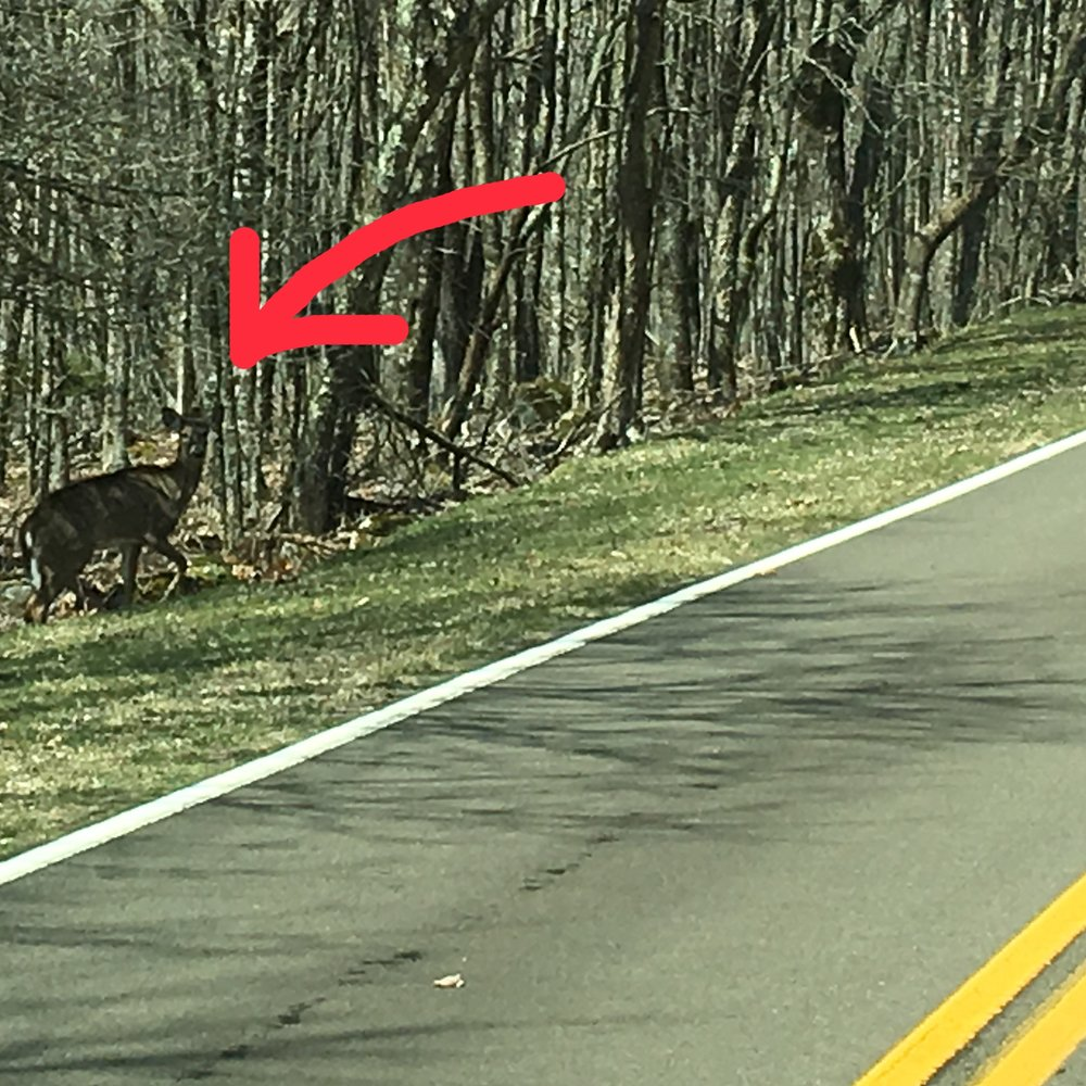 Wildlife  - The creatures of the woods are adept at camouflaging themselves to blend in. This can be disastrous for an RVer. Scan the roadside as you drive for wildlife and avoid driving at dusk and dawn when animals are most active.