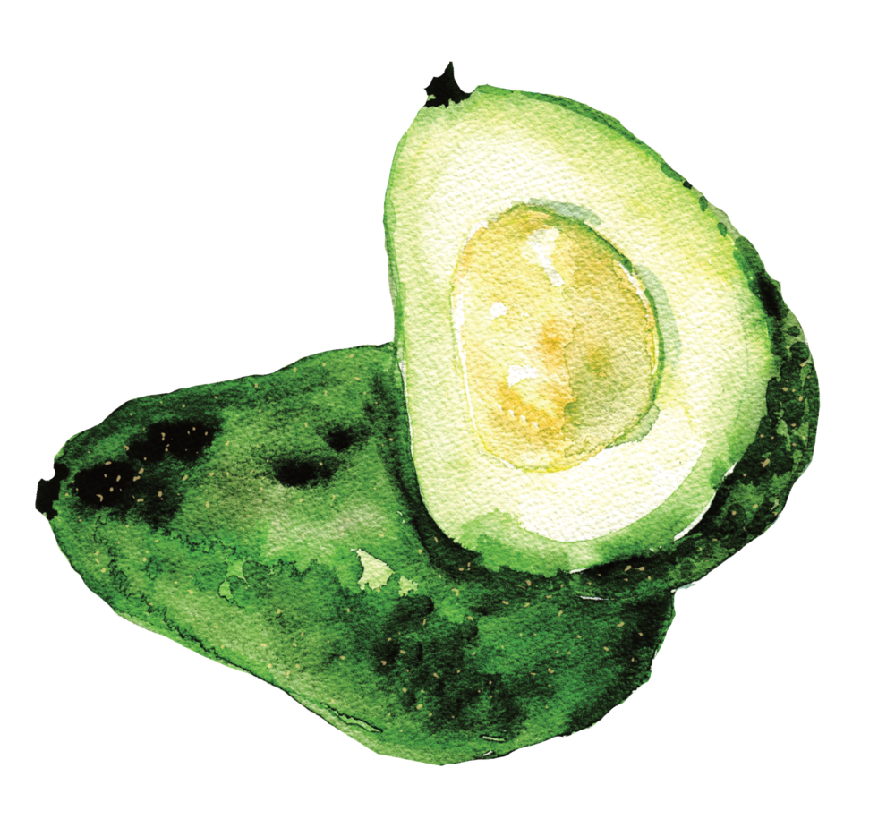AVOCADO VECTOR.png