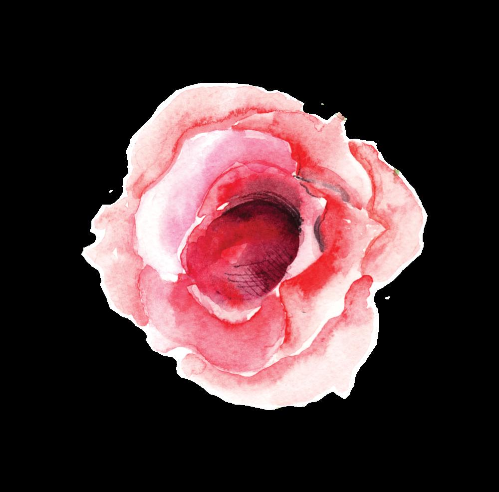 SINGLE ROSE BLOOM.png