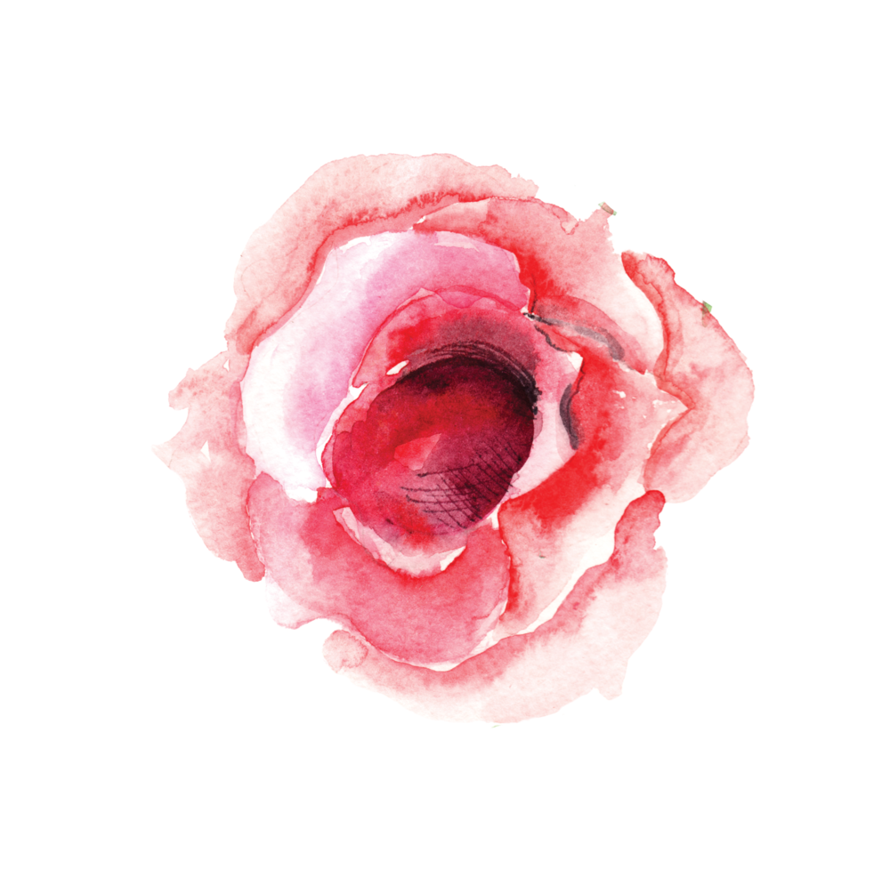 SINGLE ROSE BLOOM.png