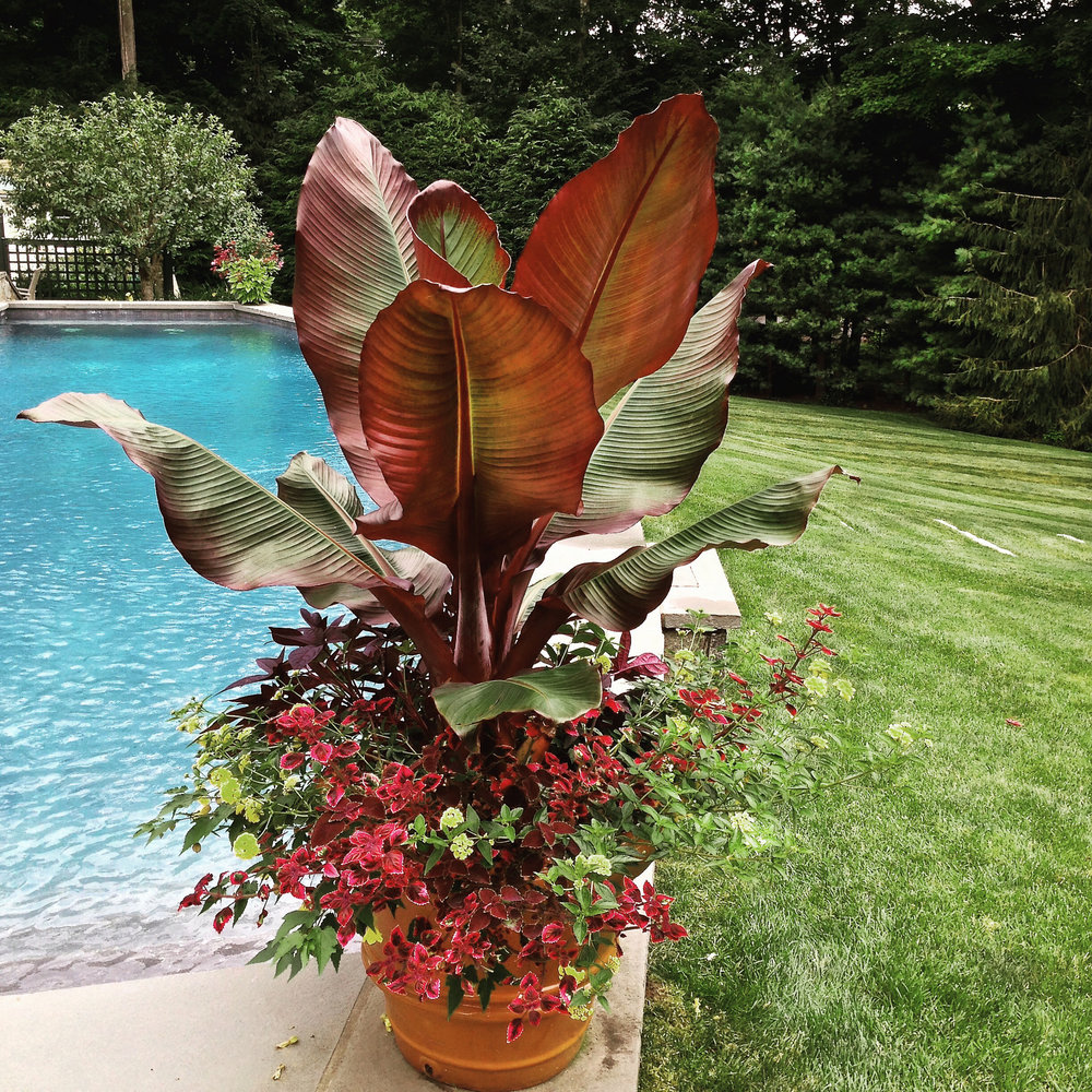 Potted Flower Design around Pool.