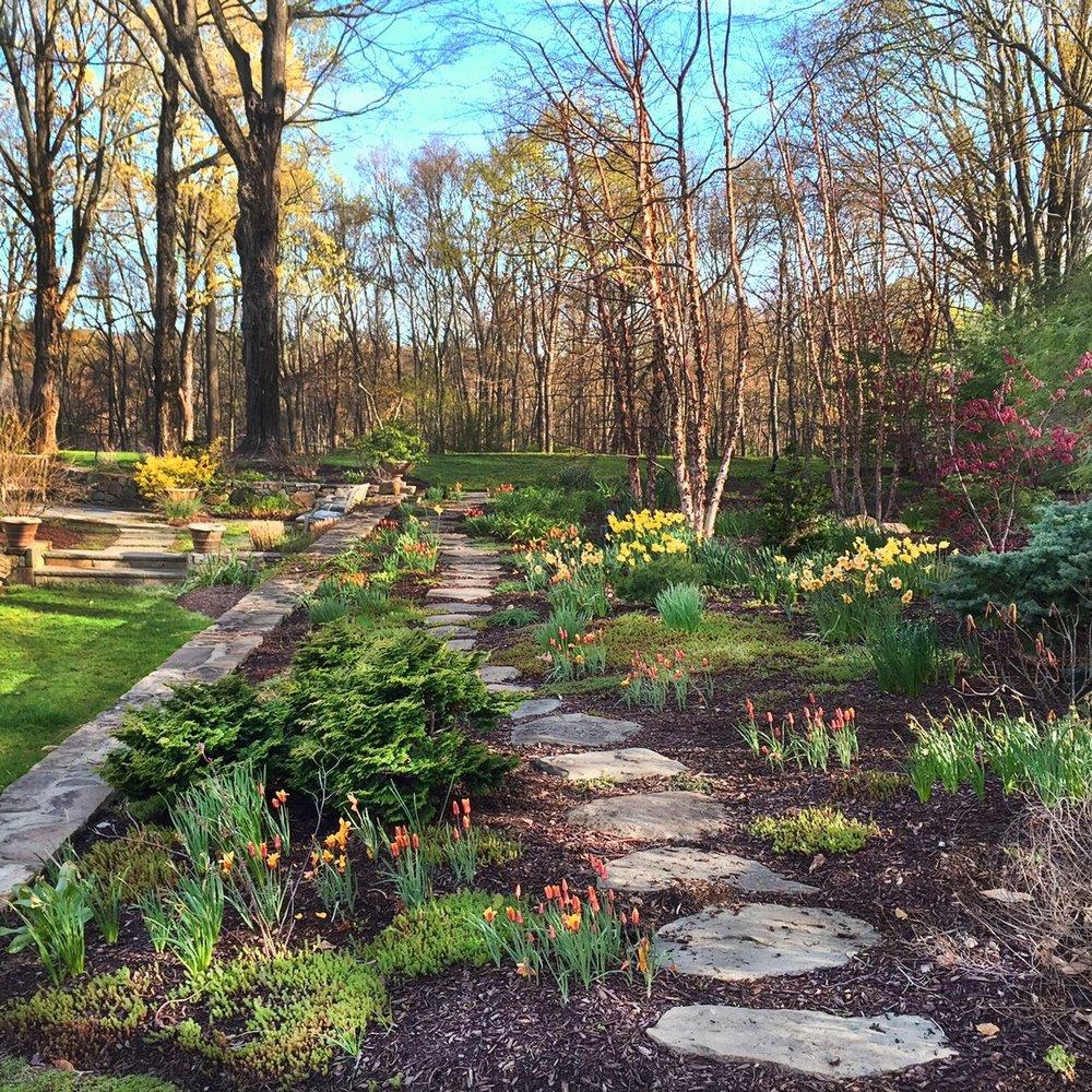 Birch Tree Garden