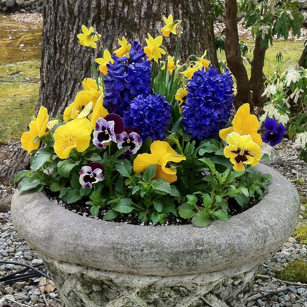 early spring container gardens
