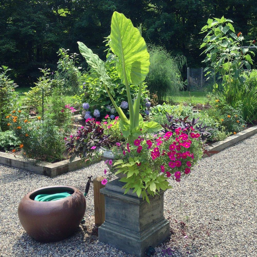perennial garden containers