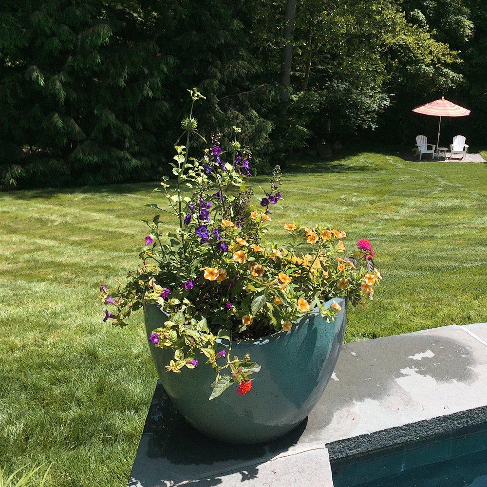 Flowers in bloom in container garden.