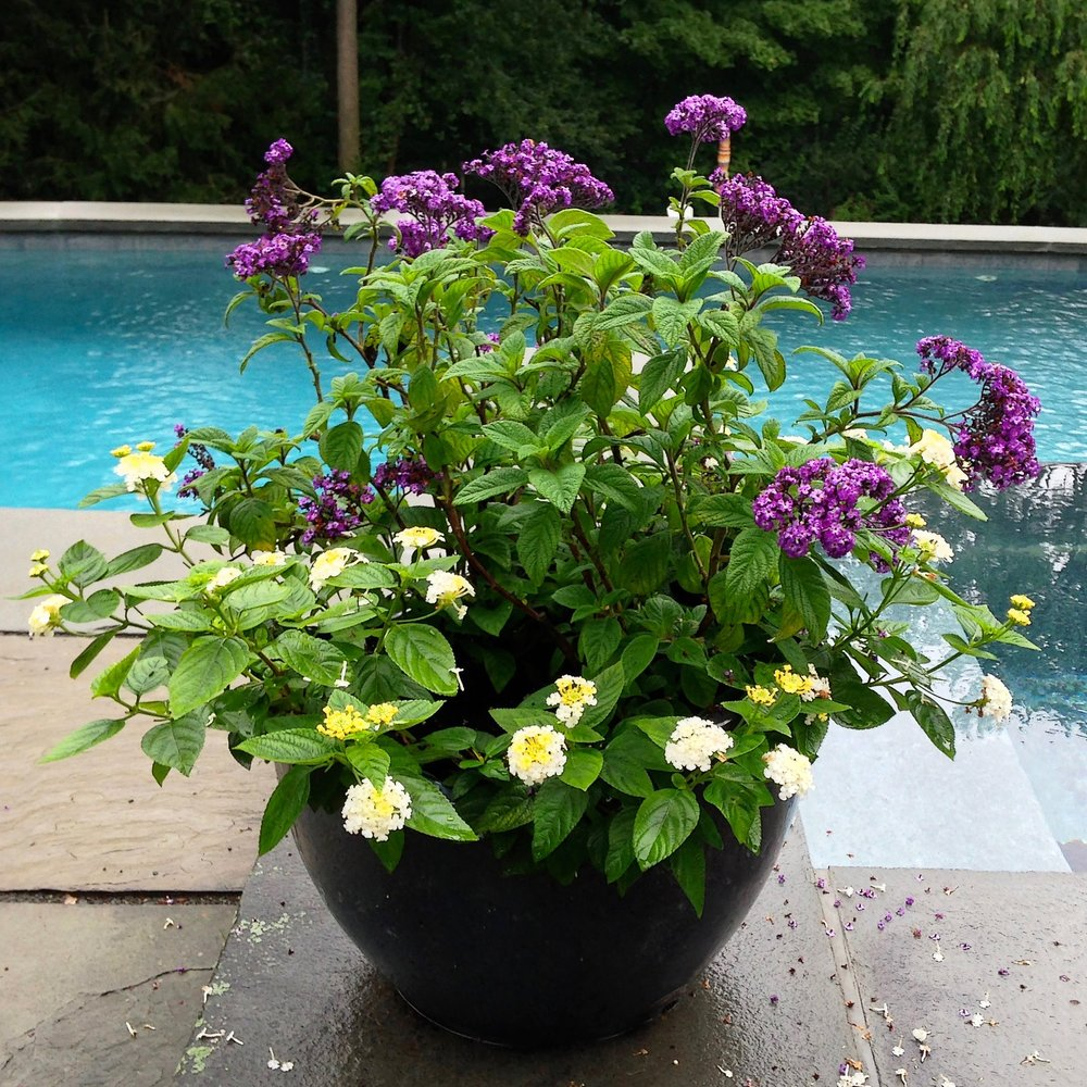 Container Garden design by the pool.