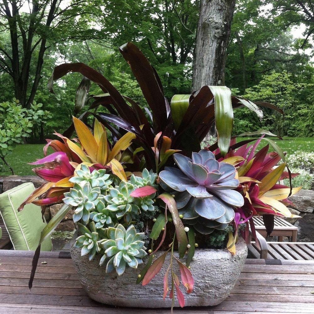 Succulent Design on back deck.