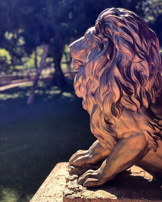 Who would have thought that a golden lion could be so majestic?  I guess it should have been pretty obvious haha ____________________ #goldenlion #lion #gold #lionsculpture #sculpture #beautifulmorning #goldlion