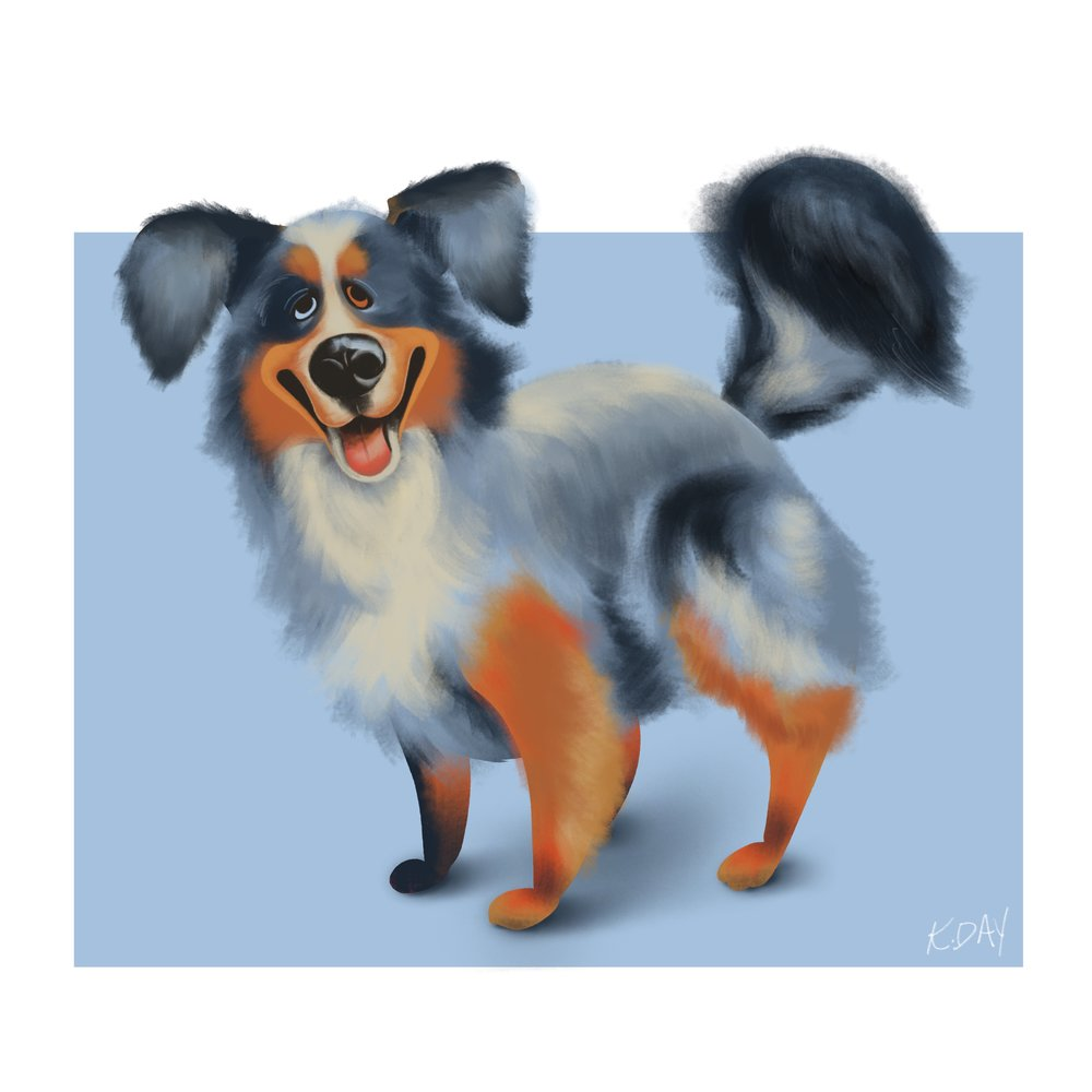 dogs-aussie_Shepherd_.jpg