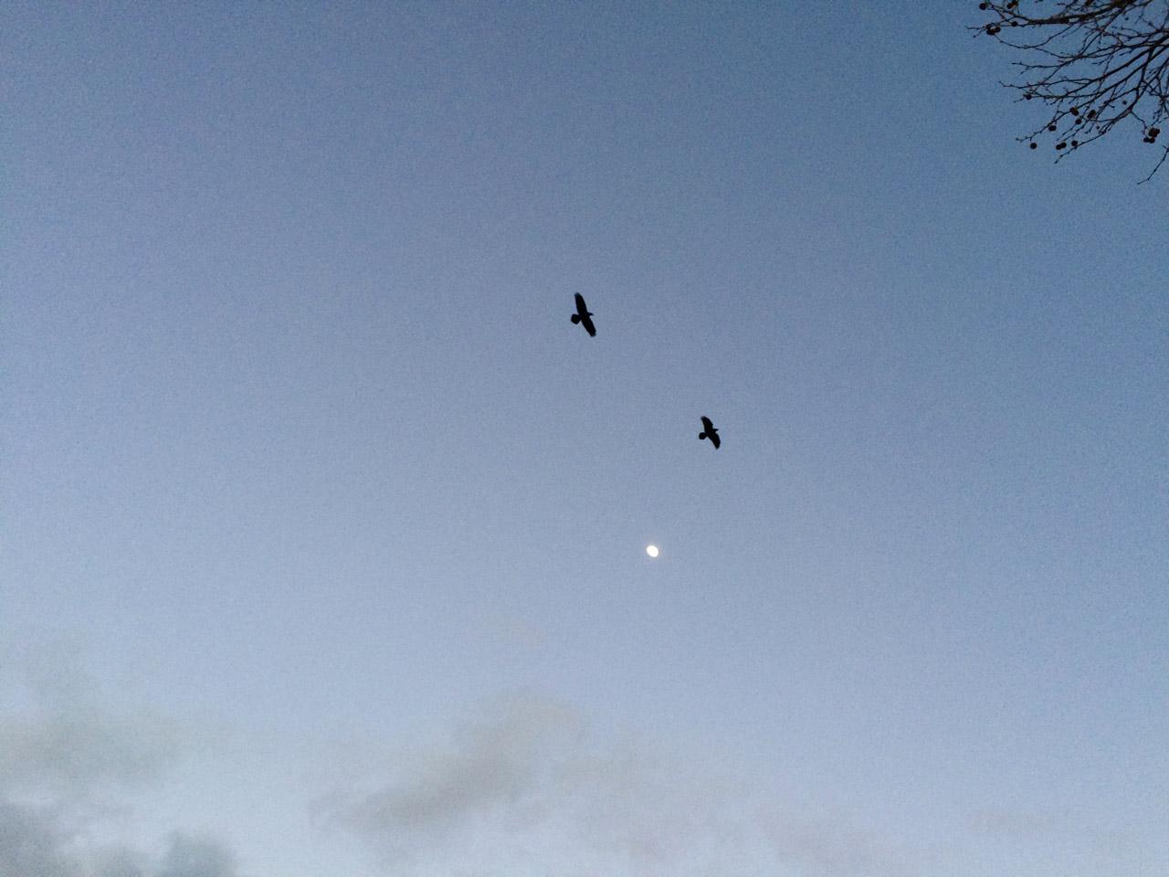 Raven-Moon_by-Satya-Colombo_1280x960