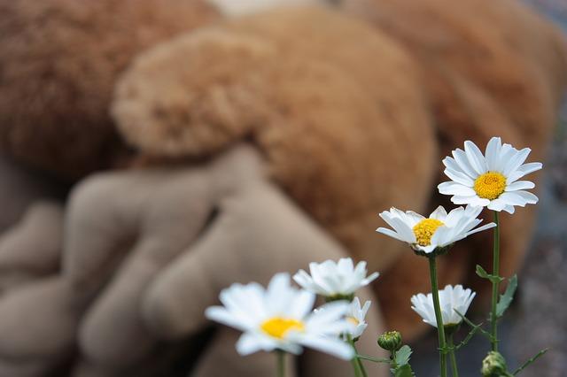 daisy-418959_640.jpg