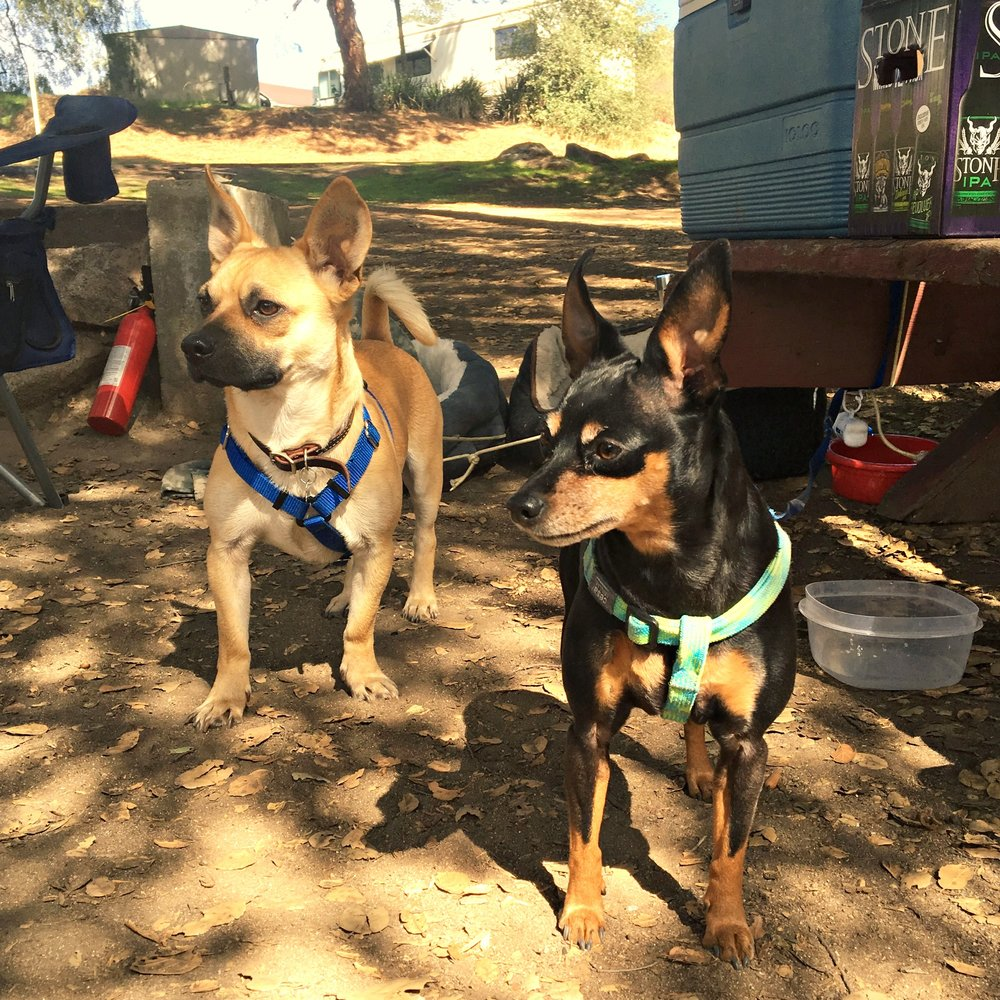 camping with dogs, how to camp with dogs, dog friendly campgrounds