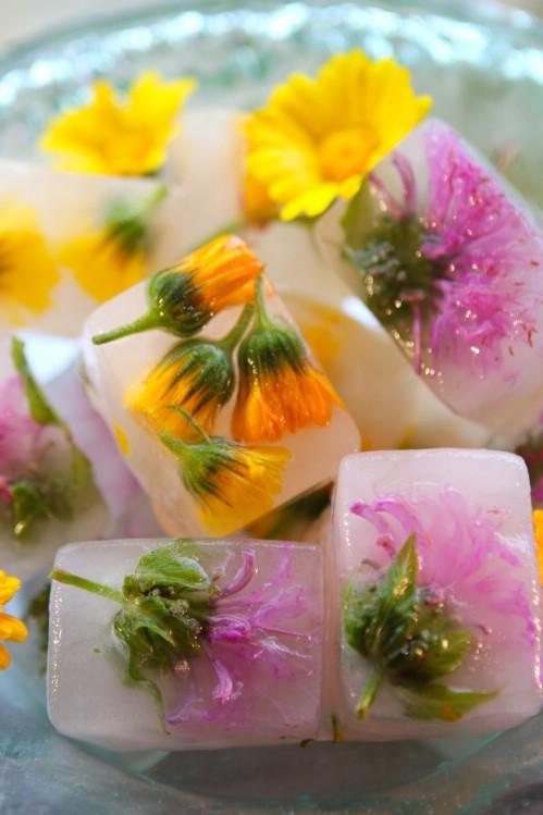 8-herbal-ice-cube-trays.jpg