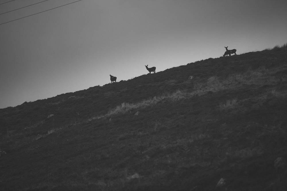 scotland-nov-2016-2430.jpg