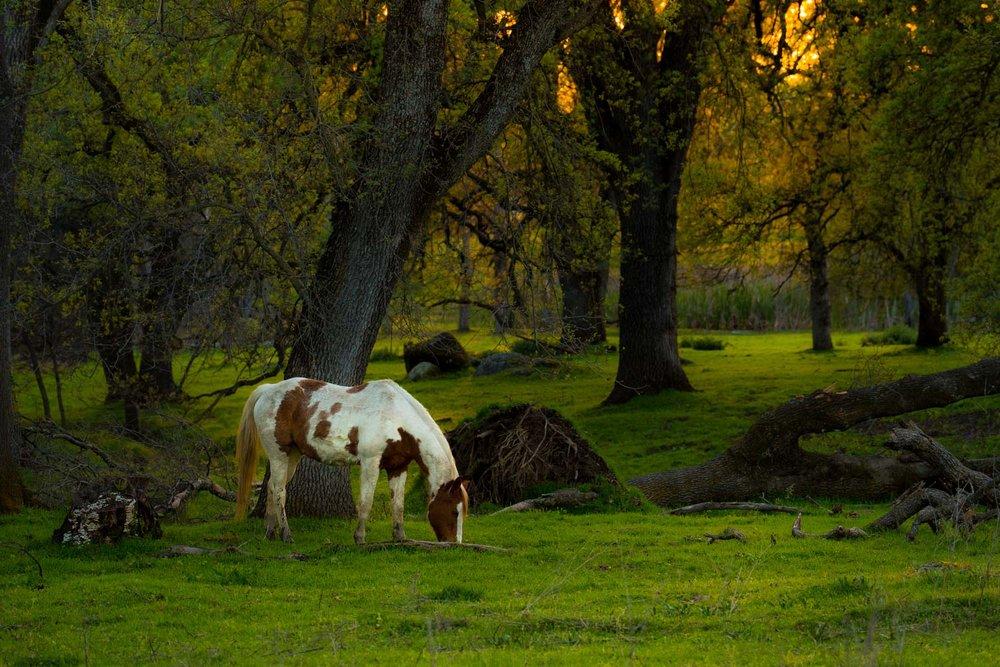 woodside-horse-1-2.jpg