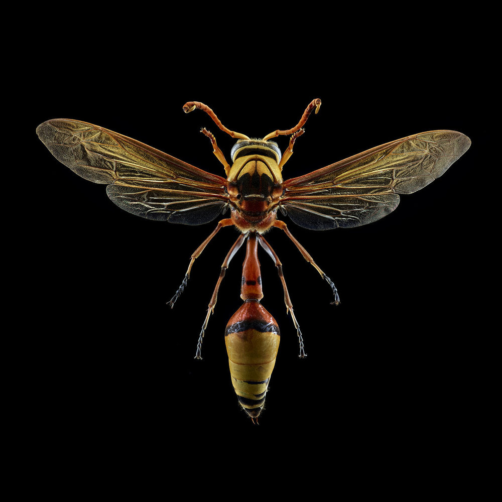 Potter Wasp 270MB.jpg
