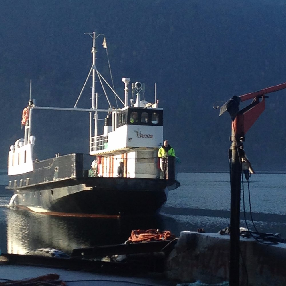 Solvorn-Ornes - The Urnesferry / The LustrafjordPrices Timetables