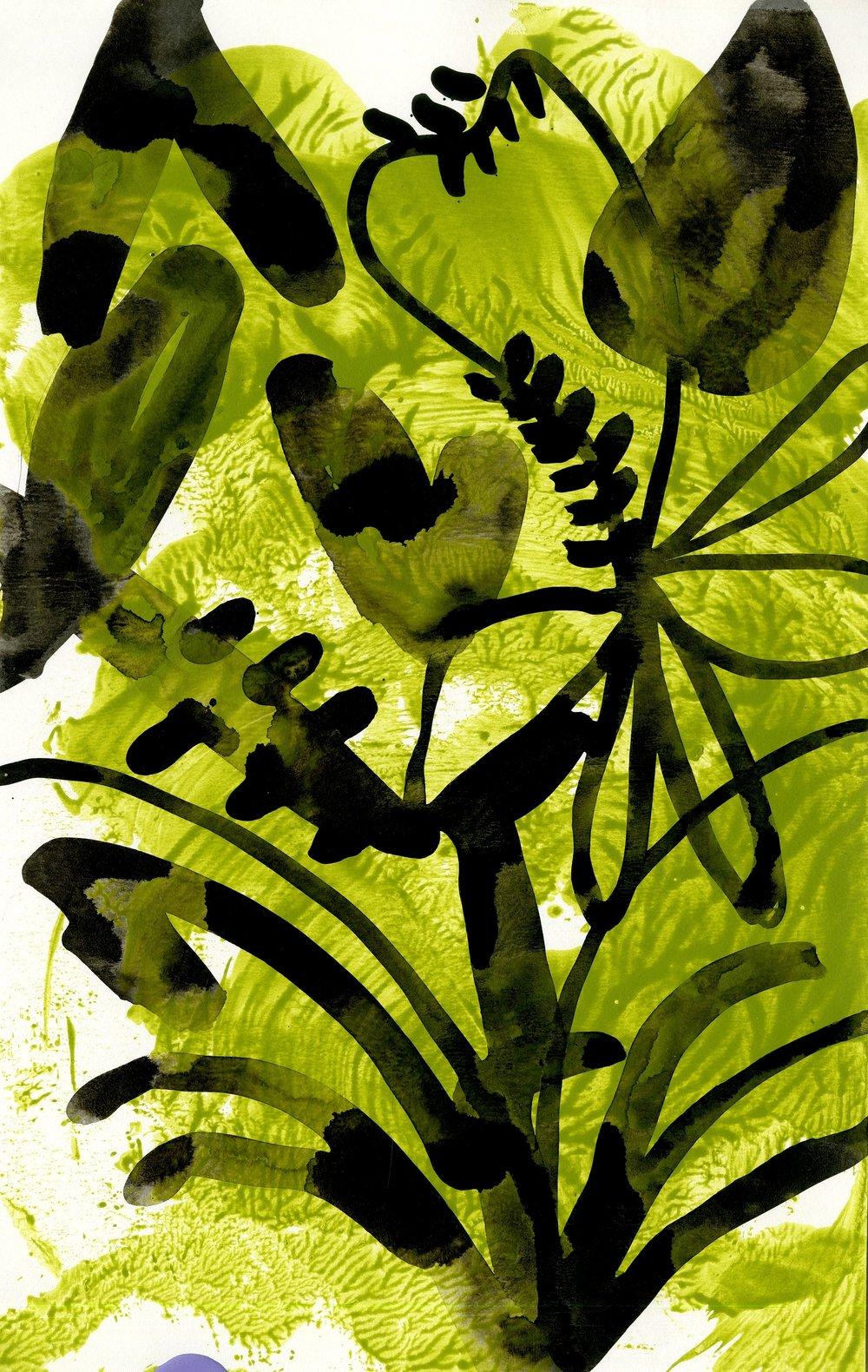 Chlorophyll tea II
