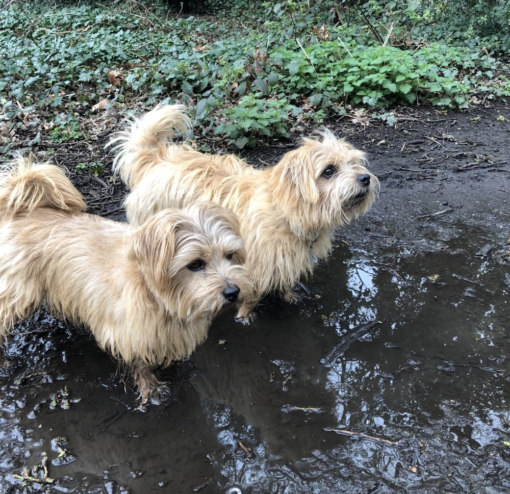 Reg and Bob on a wet, muddy walk
