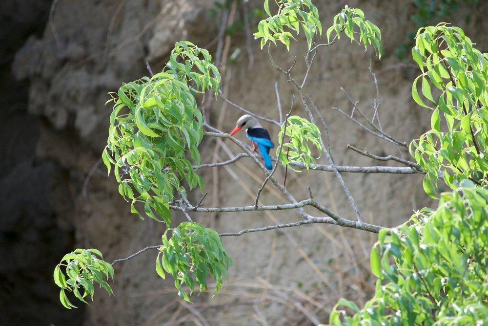 Grosplan_oiseau.jpg