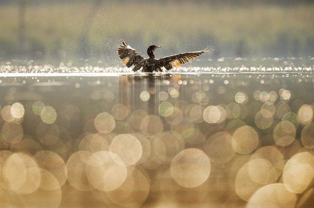 bird-1867066_1280.jpg