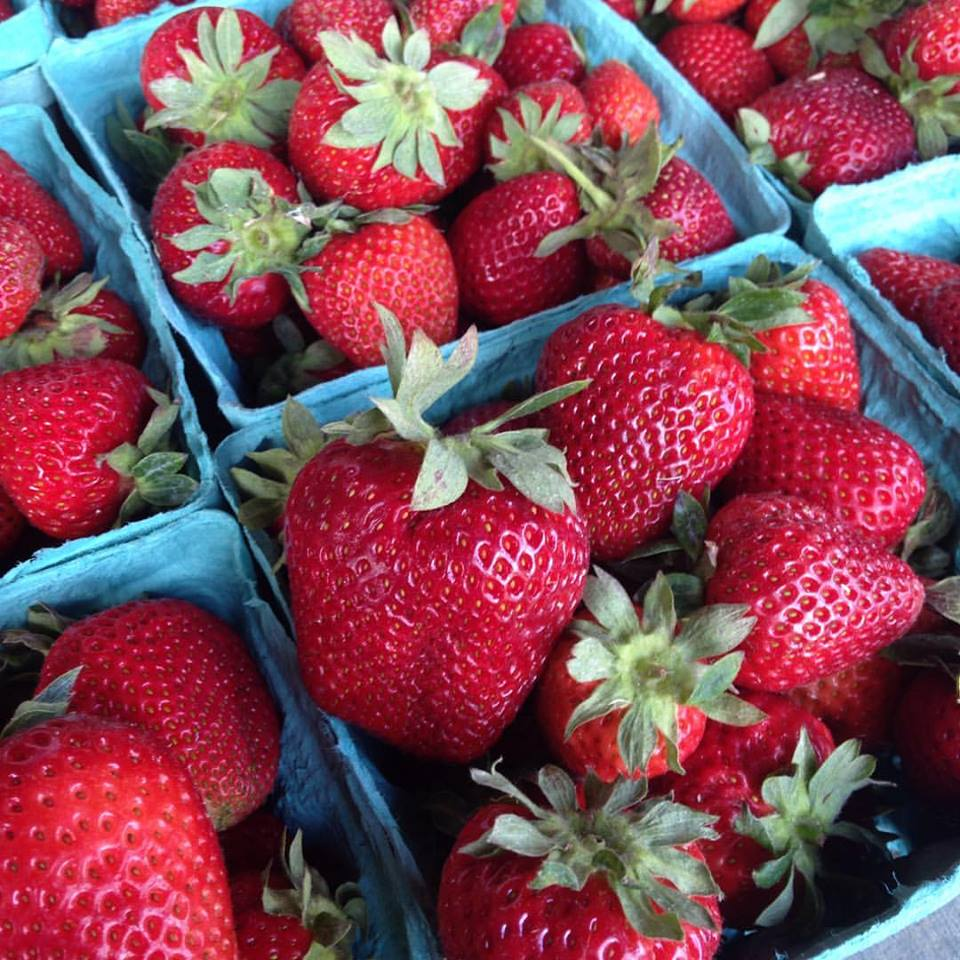 78 acres farm strawberries