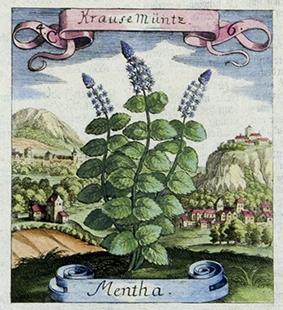 Antique Flora and Fauna
