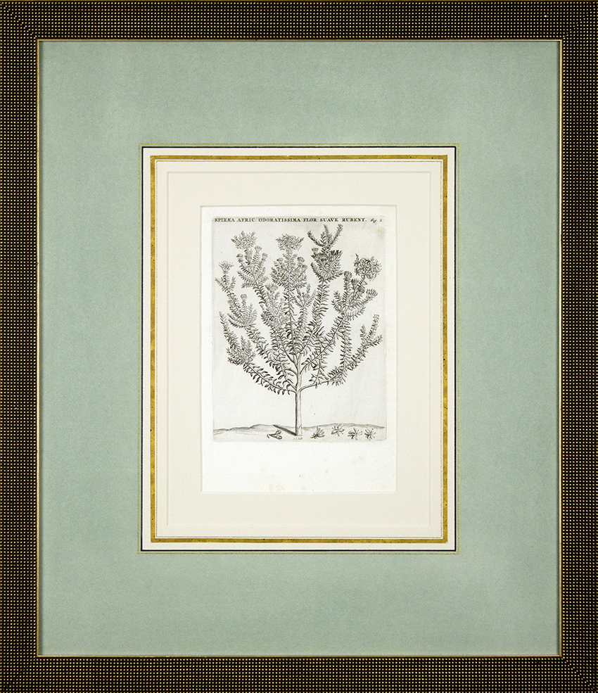 "Antique Botanical - 17 3/4"" x 20 3/4"" framed"