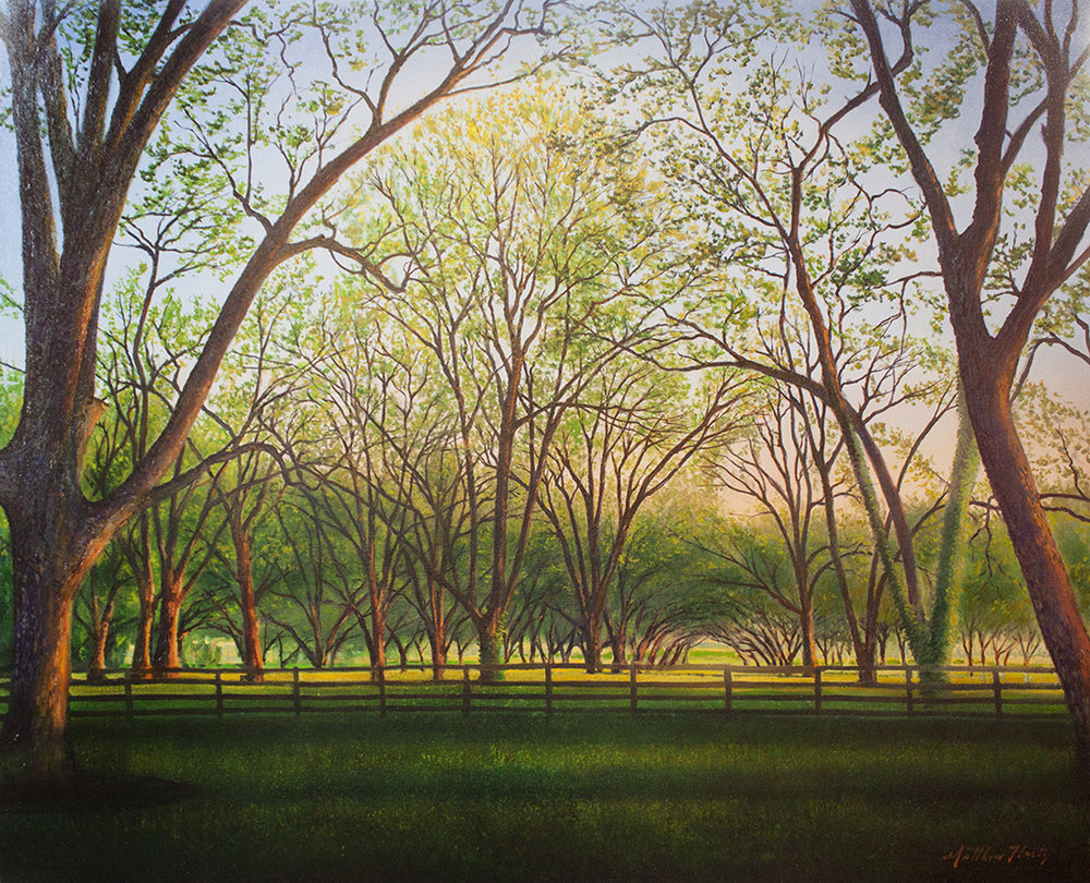 """Pecan Orchard - 60"""" x 48"""" - oil on canvas"""