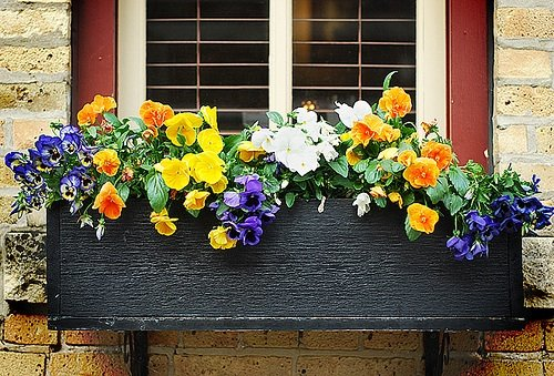 flowers-windows-boxes.jpg