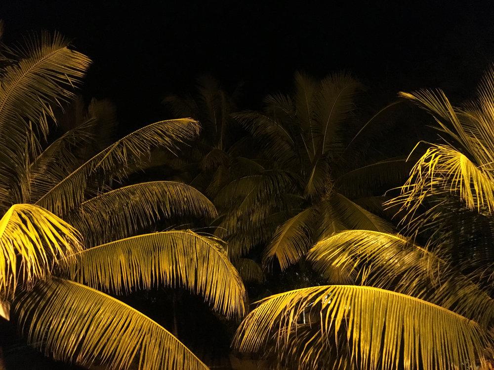 Palms1X.jpg